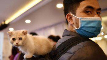 los gatos son mas susceptibles a tener covid que los perros