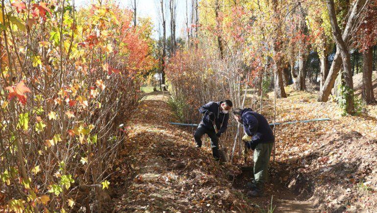 Denuncian que robaron 65 pinos de Parque Norte