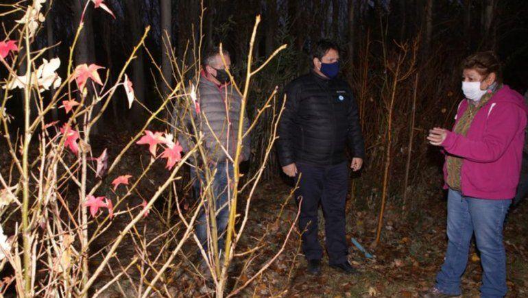 Llegaron 4800 pinos ponderosa para un plan de reforestación