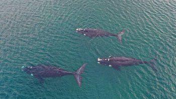 sorpresa: tres ballenas se lucieron en las grutas