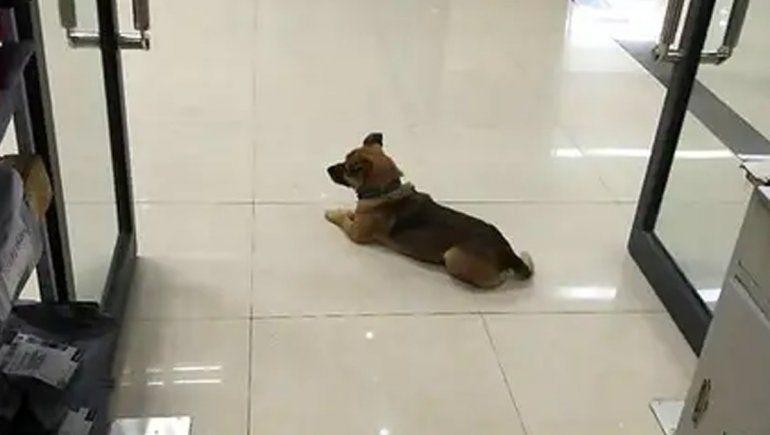 El perro que conmovió por su lealtad: esperó 3 meses en el hospital a su dueño que murió de coronavirus