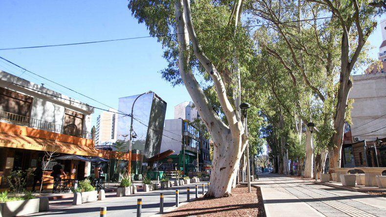 Piden suspender retiro de árboles de la 9 de Julio