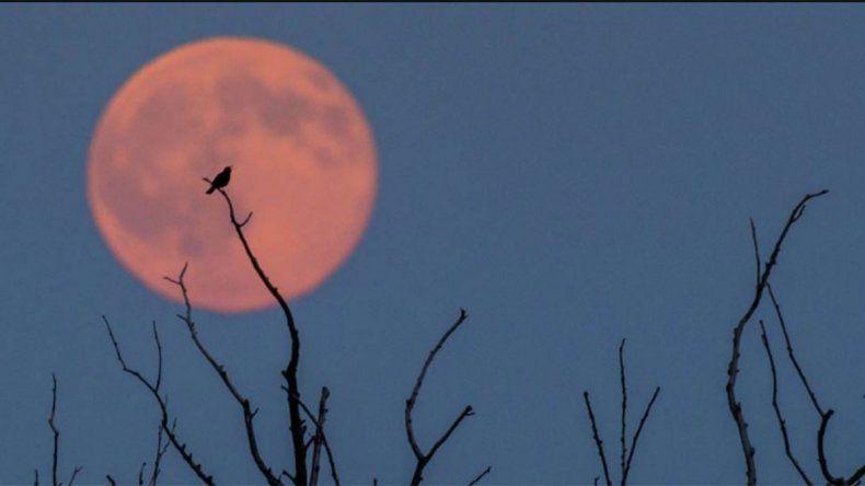 Cómo se podrá ver el segundo eclipse lunar