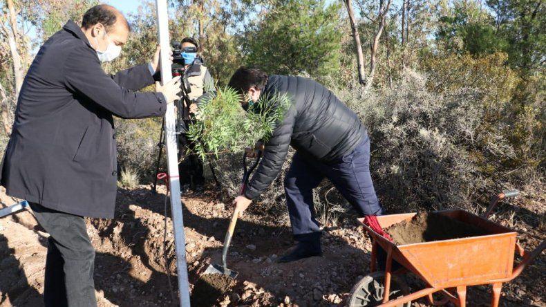 Con 10 mil árboles, la Muni implementa el mayor Plan Forestal de la ciudad