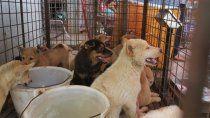 corea del norte compro perros para comerlos