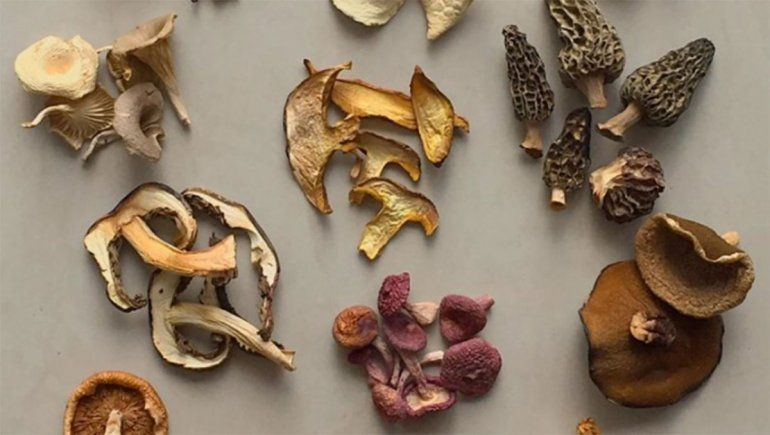 Facundo Chiara: el señor de los hongos