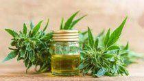 la rioja quiere ser un polo de exportacion de cannabis
