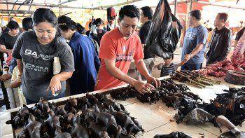 china cerrara mercados de venta de murcielagos