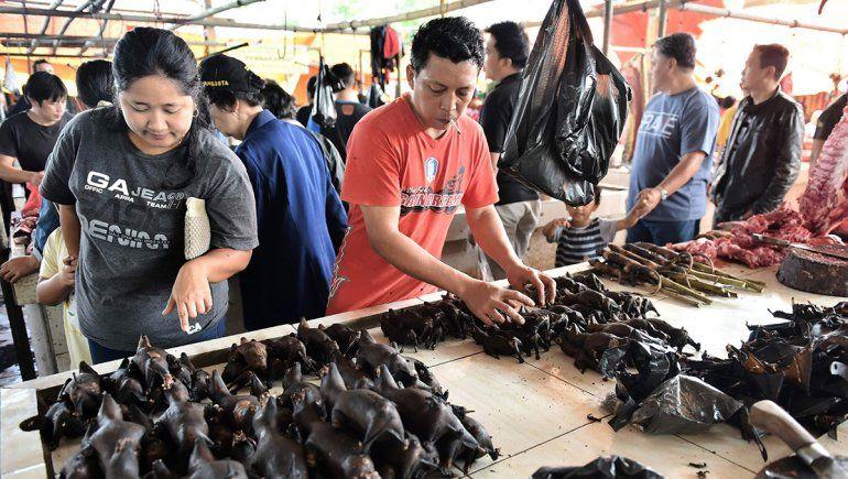 China cerrará mercados de venta de murciélagos