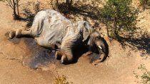 inexplicable muerte de 350 elefantes en africa