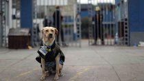 perrito espera al dueno, internado con coronavirus