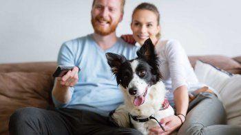 Doce películas con animales para disfrutar en familia