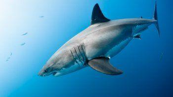 Un tiburón blanco ataca una embarcación.