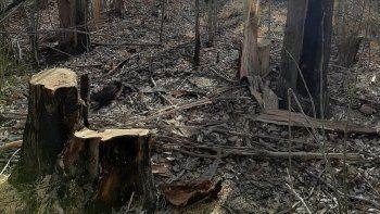 preocupa la tala ilegal en zona riberena: 65 arboles afectados