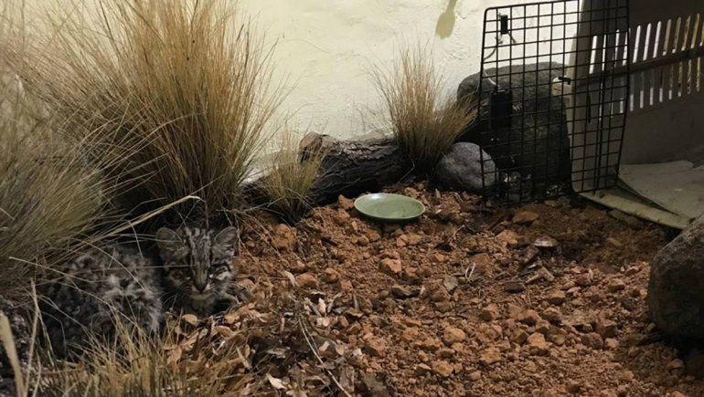 Piden ayuda para equipar un refugio de animales en Aluminé