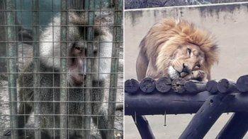 Los animales del zoológico de Córdoba están en pésimas condiciones. Se viralizó un video.
