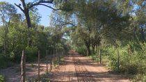 la enorme perdida de bosques nativos en el pais