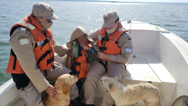 Misiones: dos perros le salvaron la vida a un nene de 9 años
