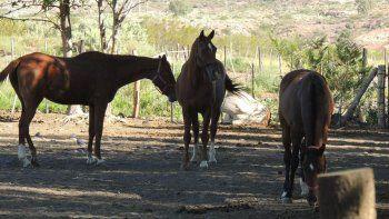 El campo en puja en Vaca Muerta es para criar caballos