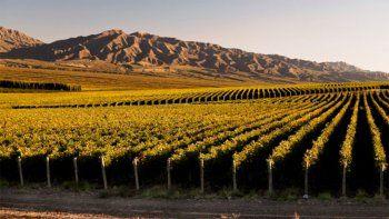 wines of argentina presento su plan de negocios digital