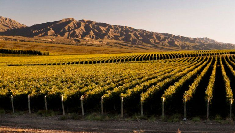 Wines of Argentina presentó su plan de negocios digital