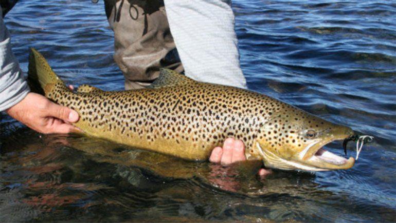 Diputados tratan el adelantamiento de la temporada de pesca