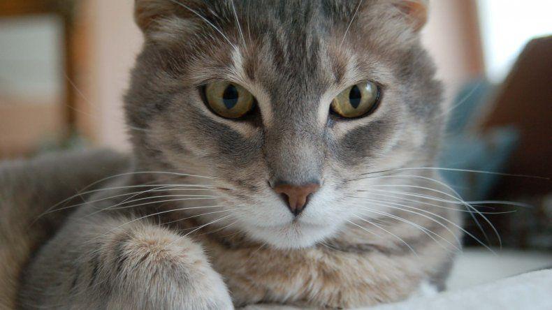 Hoy es el Día Internacional del Gato: se celebra tres veces al año