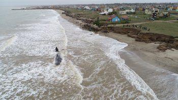 mar del plata: murio el cachalote varado en la costa