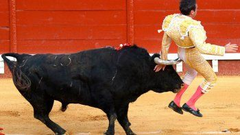 espana: toro cornea a experto torero y lo hirio en los gluteos