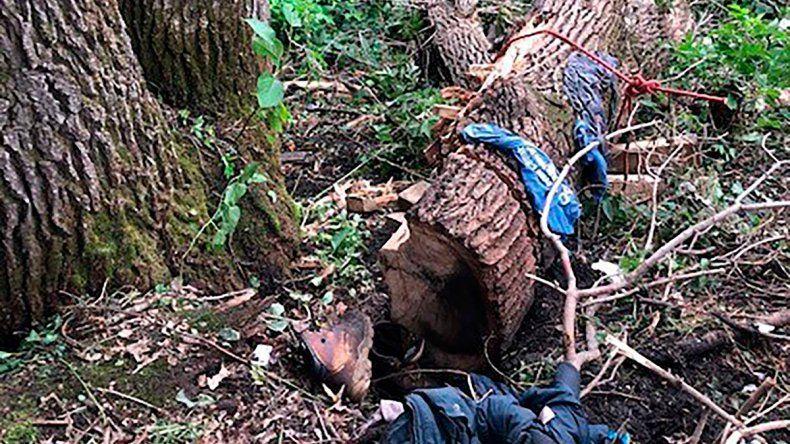 Pasó 4 días con un árbol encima y sobrevivió