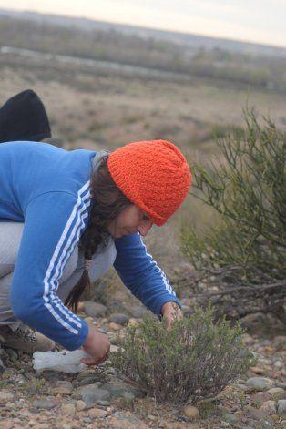 Luciana recolectando jarilla para sus productos.
