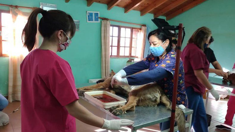 Es intendenta y también colabora como veterinaria