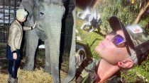 la desesperada lucha de daniela cardone por salvar a la elefanta shamira