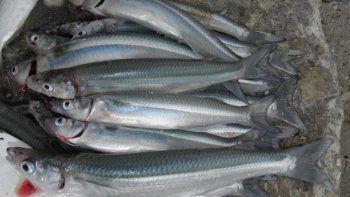 Atraparon a pescadores furtivos y les incautaron más de 400 pejerreyes
