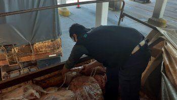 Decomisaron una tonelada de carne escondida en muebles