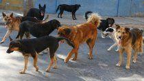 vecinos filmaron perros sueltos en el barrio alsogaray