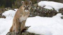 impactante sorpresa: se encontraron un puma subiendo al cerro bayo