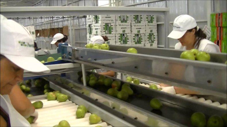 Se produjeron más de 300 despidos en empresas frutícolas