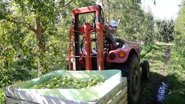 La cosecha de peras y manzanas cayó en todo el mundo el último año.