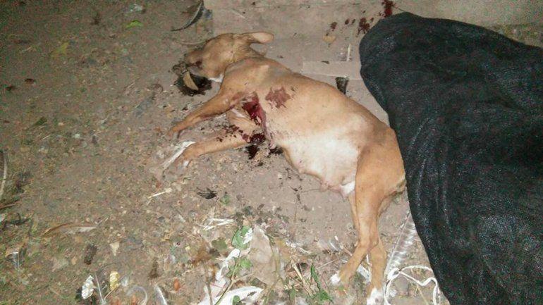 La perra asesinada había tenido crías hace poco tiempo y se encontraba en pleno proceso de lactancia.