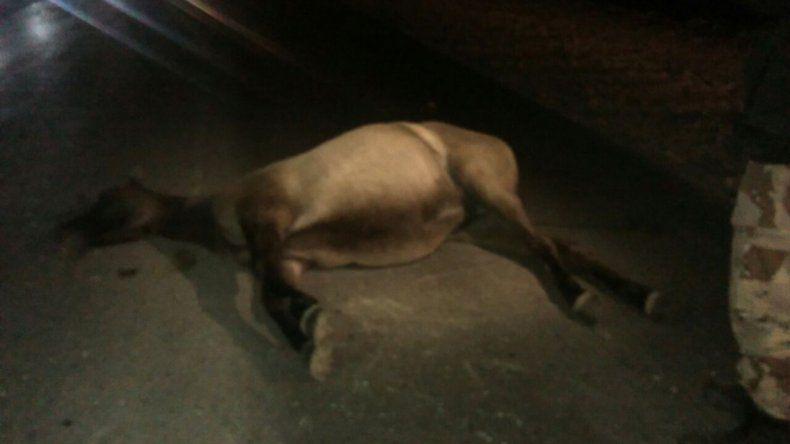 Un colectivo chocó a dos caballos sobre Ruta 22