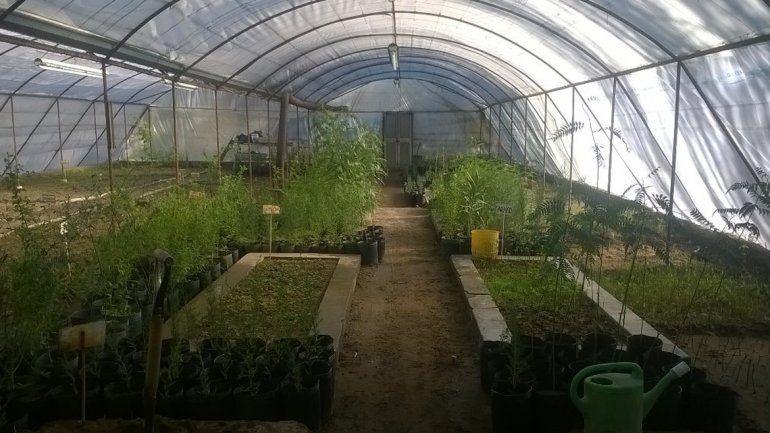 El vivero municipal produjo 15 mil plantines nuevos for Viveros en neuquen
