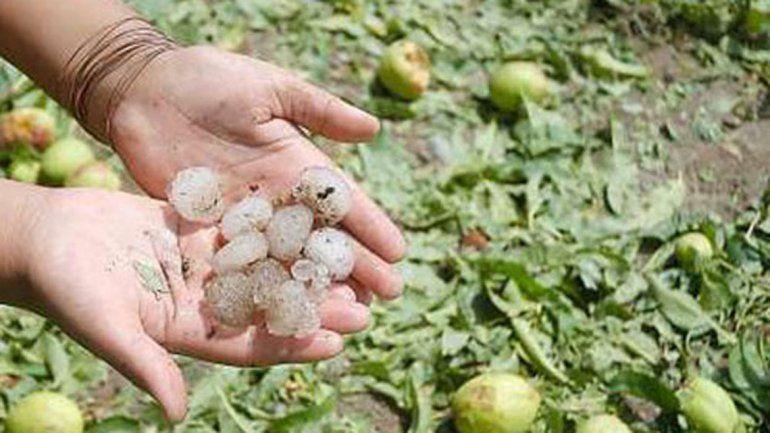Funcionarios de Provincia recorren las chacras afectadas por el granizo