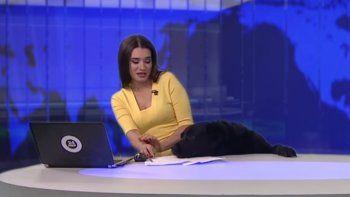Un gracioso perro se infiltra en un noticiero y causa furor