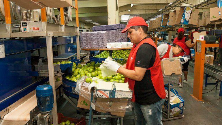 Río Negro propone la exención total de Ingresos Brutos para la fruticultura