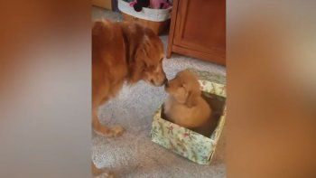 Un perro recibe la mejor sorpresa de Navidad