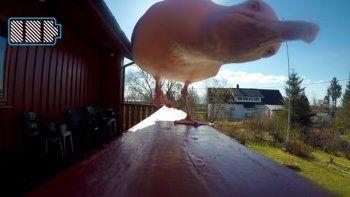 Una gaviota se robó una GoPro y esto fue lo que grabó