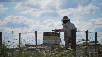 la ciudad tendra laboratorio de miel en la ruta 22