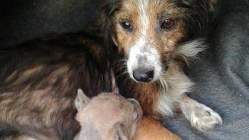 salvaron a un perrito de morir asfixiado adentro de una bolsa