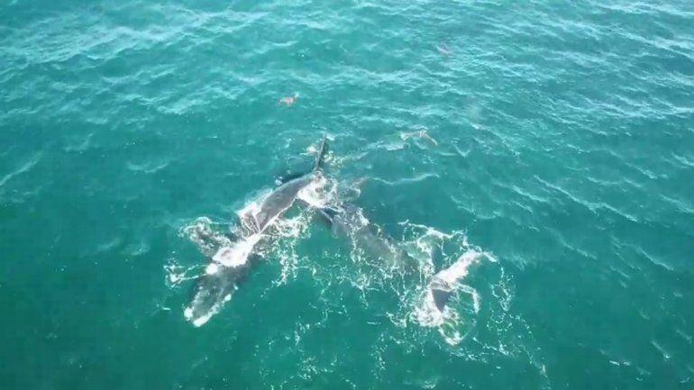 Las Grutas: llegaron las primeras ballenas de la temporada
